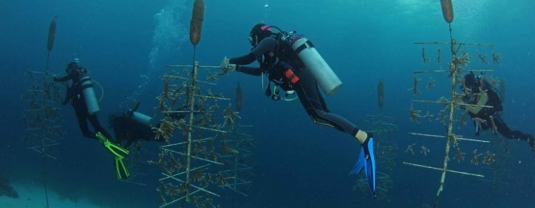 Coral Restoration Foundation Curacao (CRFC)